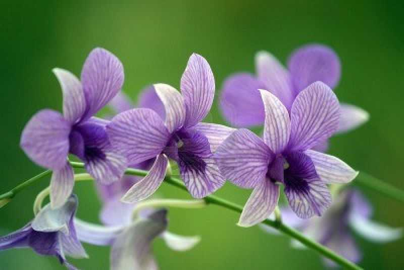 Orchidee sauvage esthetique estheticienne domicile for Velizy villacoublay code postal